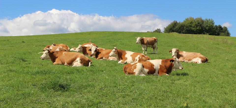 Burgenländischer Rinderzuchtverband